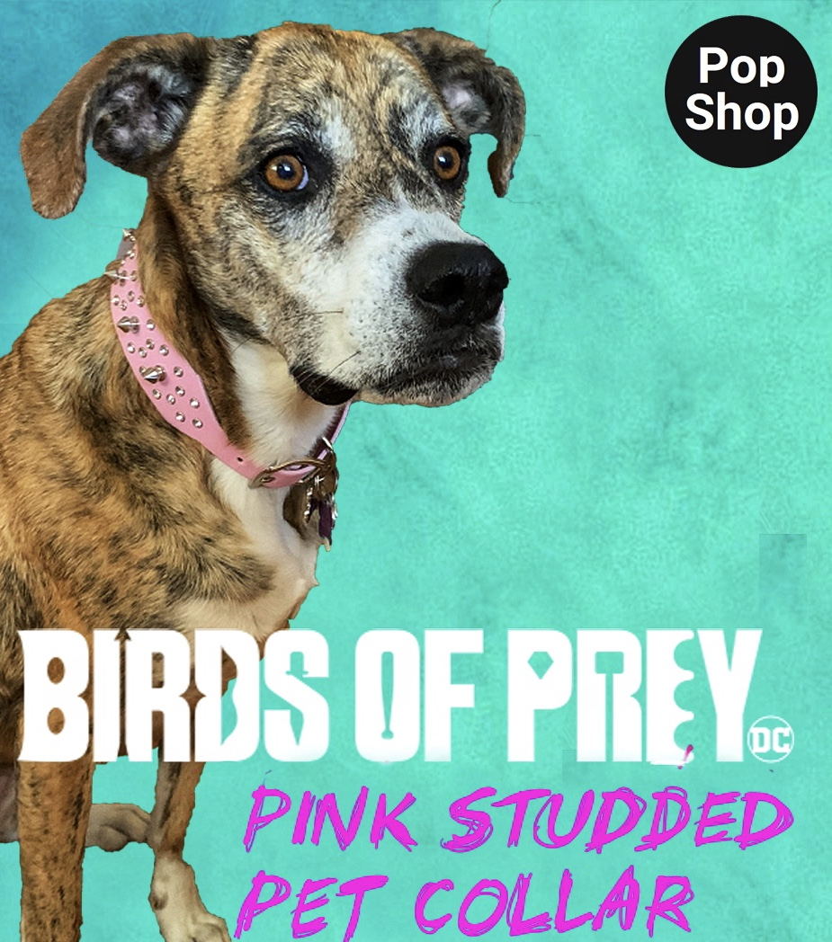 Birds of Prey Pink Studded Pet Collar Review